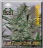 Black Skull Speed Haze Female 5 Marijuana Seeds